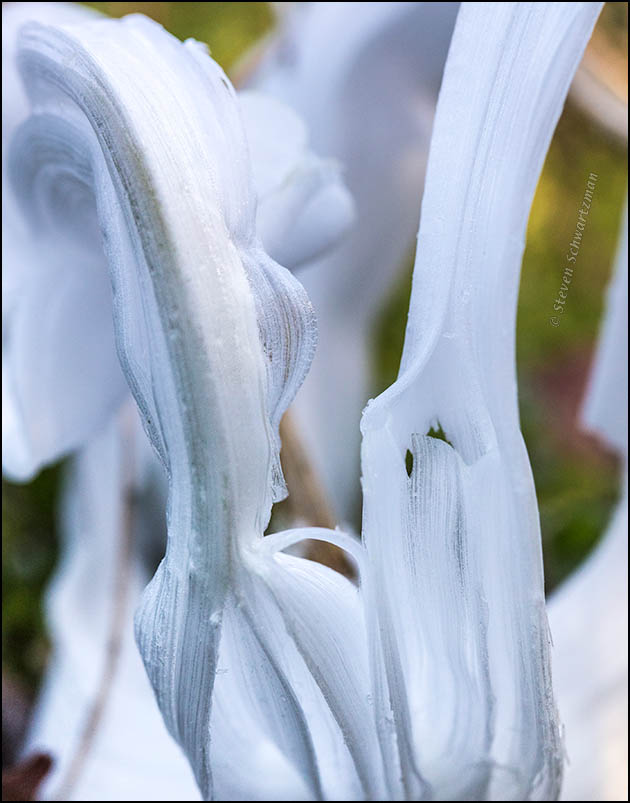frostweed-ice-abstraction-0391