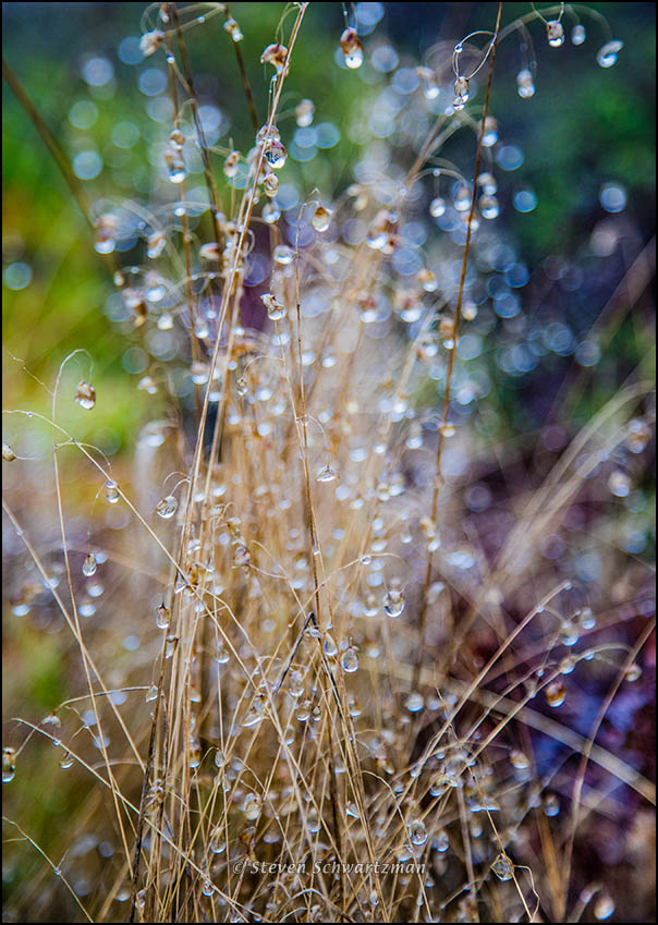 raindrops-on-otherwise-dry-grass-7451