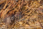 seaweed-like-orange-spaghetti-detail-9690