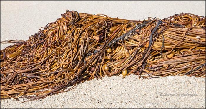 seaweed-like-orange-spaghetti-on-the-beach-9598