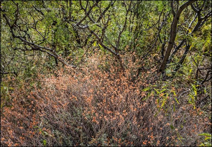 wrights-buckwheat-2728