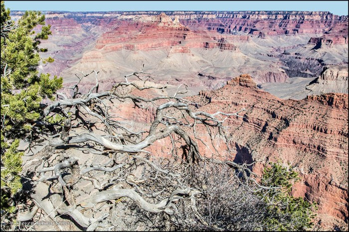 trees-at-rim-of-grand-canyon-2716