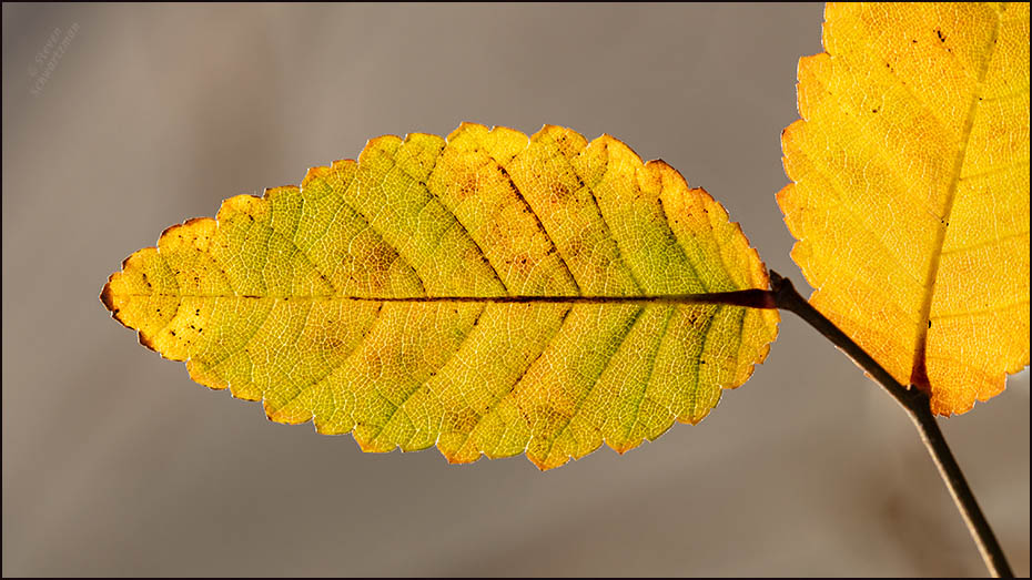 """Fall"""" foliage in winter 